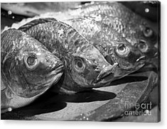 Acrylic Print featuring the photograph Fish by Dean Harte
