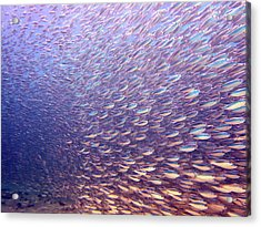 Fish Dreams Acrylic Print by Dr Peter M Forster