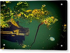 Acrylic Print featuring the photograph Fish Eye View by Dale Stillman