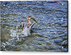 Acrylic Print featuring the photograph Fish Gulp by David Lawson