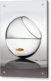 Fish In Fish Bowl Stressed In Danger Acrylic Print by Paul Strowger