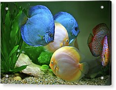 Fish In Water Acrylic Print by Vietnam