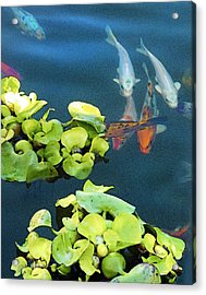 Fish-koi In A Pond, Triptych Part 1 Acrylic Print