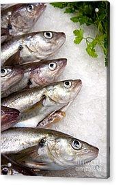 Fish On Ice Acrylic Print by Jane Rix