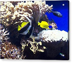 Fish Acrylic Print by Rodger Mansfield