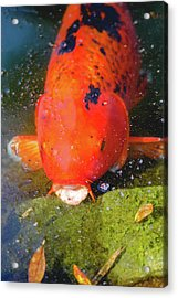 Acrylic Print featuring the photograph Fish Surprise by Raphael Lopez