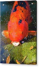 Fish Surprise Acrylic Print