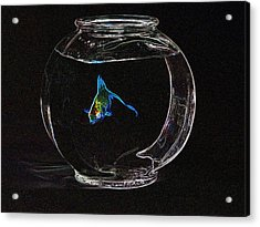 Fishbowl Acrylic Print by Tim Allen