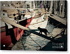 Fisherman's Cat  Acrylic Print