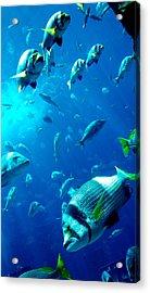 Fishes Acrylic Print by Leena Kewlani