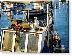 Fishing Boat Captain Seagull - Rovinj, Croatia Acrylic Print