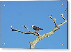 Fishing From The Sky Acrylic Print by Cheryl Allin