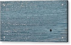 Acrylic Print featuring the photograph Fishing In The Ocean Off Palos Verdes by Joe Bonita