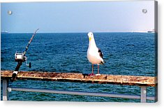 Fishing Acrylic Print by J Perez