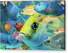 Fishy Collage 02 Acrylic Print