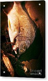 Fishy Find Acrylic Print by Jorgo Photography - Wall Art Gallery