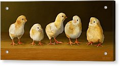 Five Chicks Named Moe Acrylic Print by Bob Nolin
