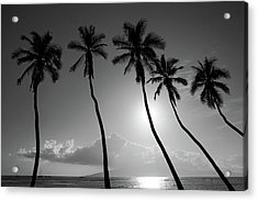 Five Coconut Palms Acrylic Print by Pierre Leclerc Photography