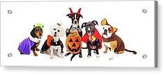 Five Dogs Wearing Halloween Costumes Banner Acrylic Print by Susan Schmitz