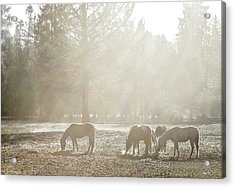 Five Horses In The Mist Acrylic Print
