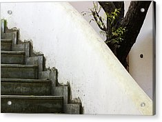 Acrylic Print featuring the photograph Five Steps To Glory by Prakash Ghai
