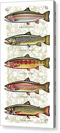 Five Trout Panel Acrylic Print