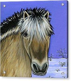 Fjord Pony Acrylic Print by Leanne Wilkes