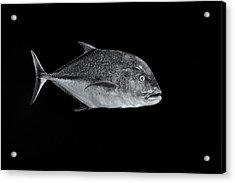 Fla-150811-nd800e-26052-bw-selenium Acrylic Print