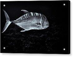 Fla-150811-nd800e-26063-bw-selenium Acrylic Print