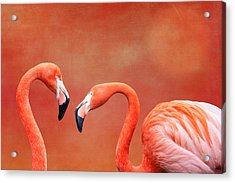 Flamboyant Flamingos Acrylic Print