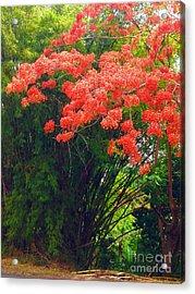 Flamboyant With Bamboo Acrylic Print