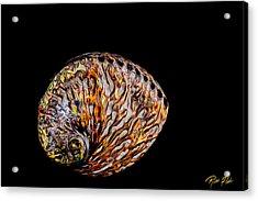 Flame Abalone Acrylic Print