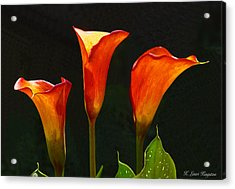 Flame Calla Lily Flower Acrylic Print by K L Kingston