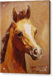 Flame Princess    Arabian Filly Portrait Acrylic Print by JoAnne Corpany