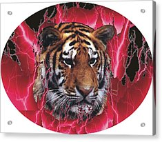 Flame Tiger Acrylic Print by Kathy Frankford