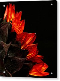 Acrylic Print featuring the photograph Flames by Judy Vincent
