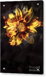 Flames Of Passion And Intimacy Acrylic Print