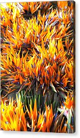 Acrylic Print featuring the photograph Flamin' Birds by John  Bartosik