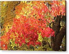 Flaming Autumn 3 Leaves Art Acrylic Print by Reid Callaway