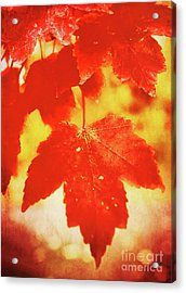 Flaming Autumn Acrylic Print