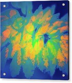 Acrylic Print featuring the photograph Flaming Foliage 2 by Ari Salmela
