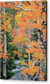 Flaming Forest Acrylic Print by David Chandler