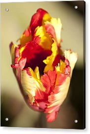 Flaming Parrot Acrylic Print