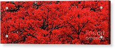 Acrylic Print featuring the photograph Flaming Red Panorama II By Kaye Menner by Kaye Menner