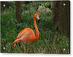 Acrylic Print featuring the photograph Flamingo 1 by Robyn Stacey