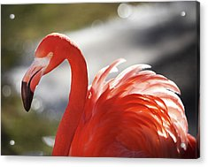 Acrylic Print featuring the photograph Flamingo 2 by Marie Leslie