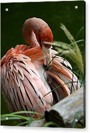 Flamingo Boudoir Acrylic Print
