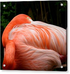 Acrylic Print featuring the photograph Flaming O by Cathy Harper