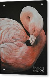 Flamingo Acrylic Print by Charlotte Yealey