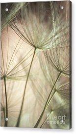 Flamingo Dandelions Acrylic Print by Iris Greenwell